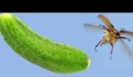 Огуречные жуки как главная проблема Волгоградчины